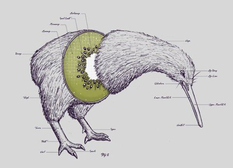 """Kiwi Anatomy"". Threadless.com | Words | Graphics | Pinterest"
