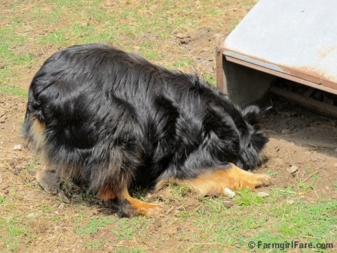 how to fix a dogs weak bladder