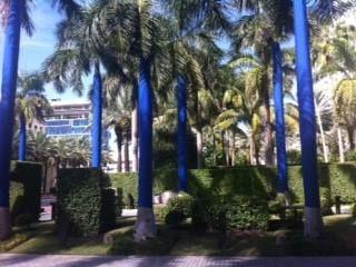 Oasis, Lucio Michetti, Miami.