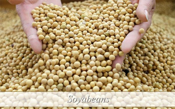 soya beans-soybeans-soya bean-soy beans-benefits of soy-soy benefits-soybean nutrition-weight loss diet-best foods for weight loss-weight loss diet plan-weight loss foods-diet to lose weight-best diet for weight loss-best weight loss diet