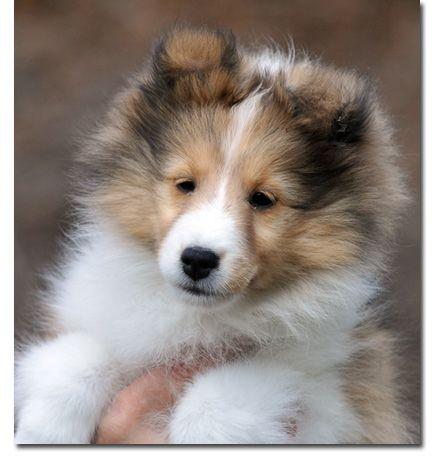Laureate . finn puppy