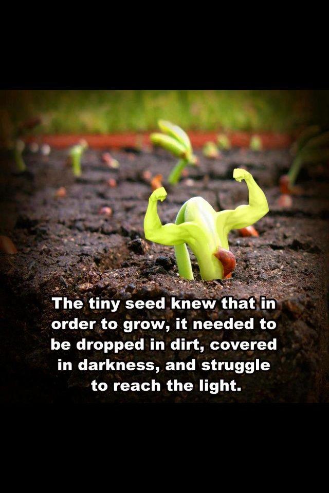 picture qoutes about determination | Teaching strength and determination | Teacher Inspiration Quotes