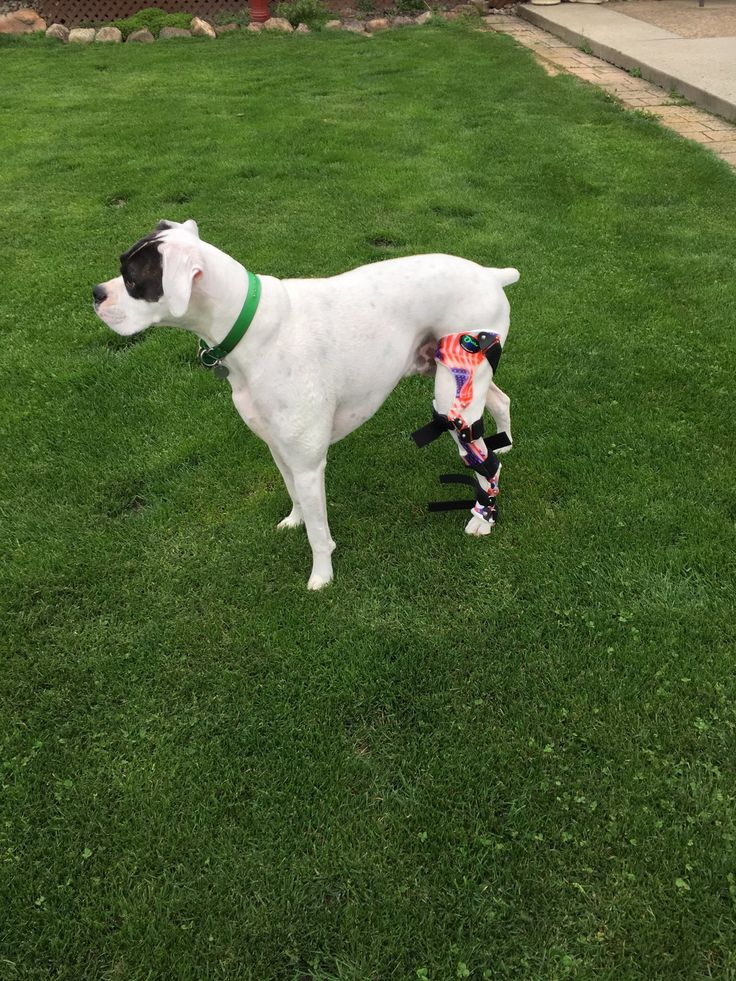 39 best dog knee brace acl images on pinterest for Dog t shirt for after surgery
