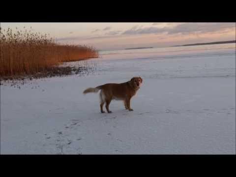 Järvi jäätyy - YouTube