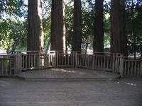 Sequoia/Peterson Grove in Sanborn Park (near Saratoga)