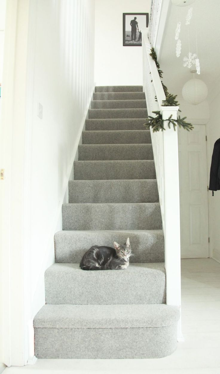 Light grey carpet - lounge & stairs