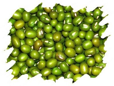 JUDIA MUNGO 27792603 http://www.periodicodecrecimientopersonal.com/la-judia-mungo-y-sus-propiedades-curativas/