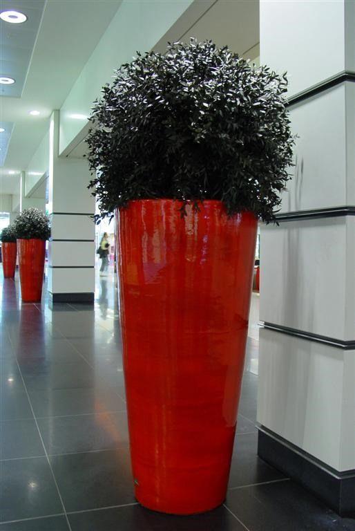 Plantes stabilisées? Any Green, pour un l'environnement vert!