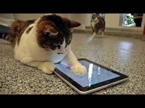 videos graciosos 2014 - videos de risa de gatos chistosos jugando con el...