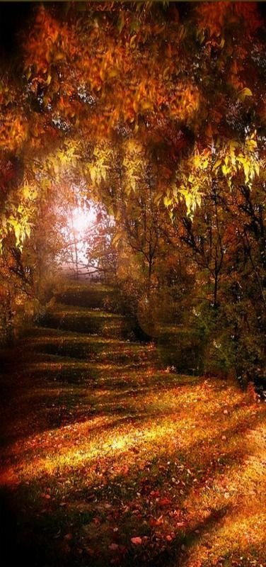 Beautiful Autumn by Amy V Miller