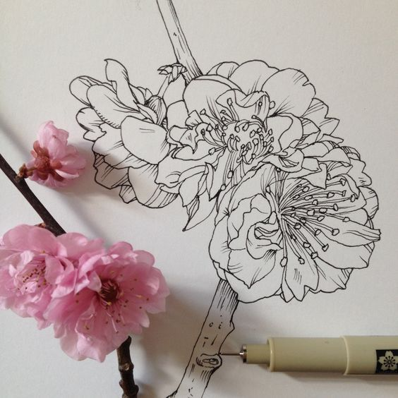 Flowers in Progress: Scientific Illustrator, Noel Badges Pugh tumblr/ Facebook / Behance Scientific illustrator and artist Noel Badges Pugh has an incredible knack for drawing flora and fauna. He recently illustrated an entire field guide about bees and keeps a regular Tumblr, Art in Progress & Completion, where he posts these tantalizing drawings of buds and blooms. Maybe it's because this is the coldest winter in 30 years, but I'm spending the rest of my day looking at these: