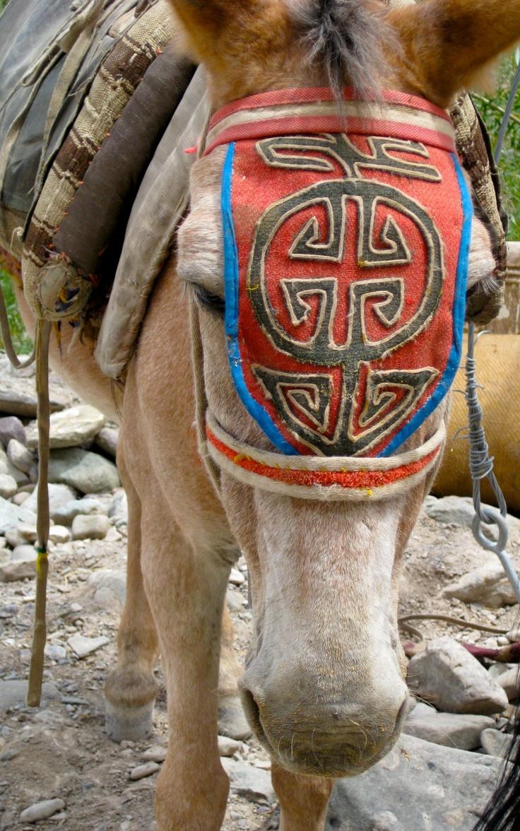 Horse in Ladakh India in Markha valley