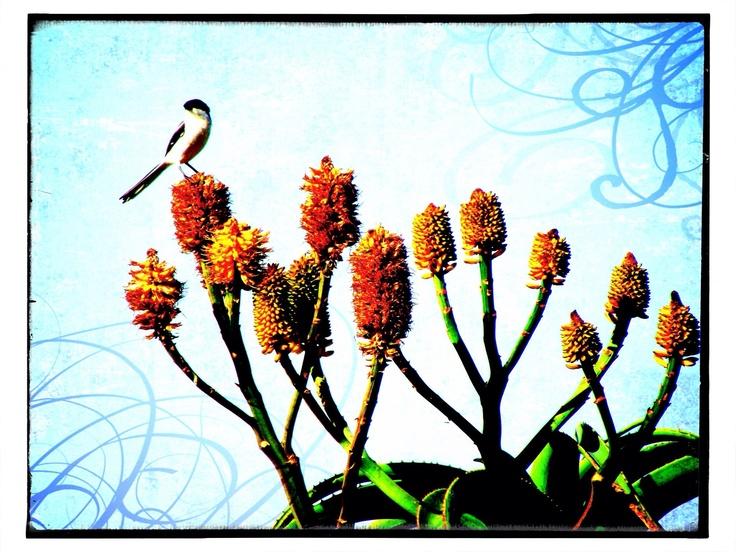 Bird on Aloe Tree
