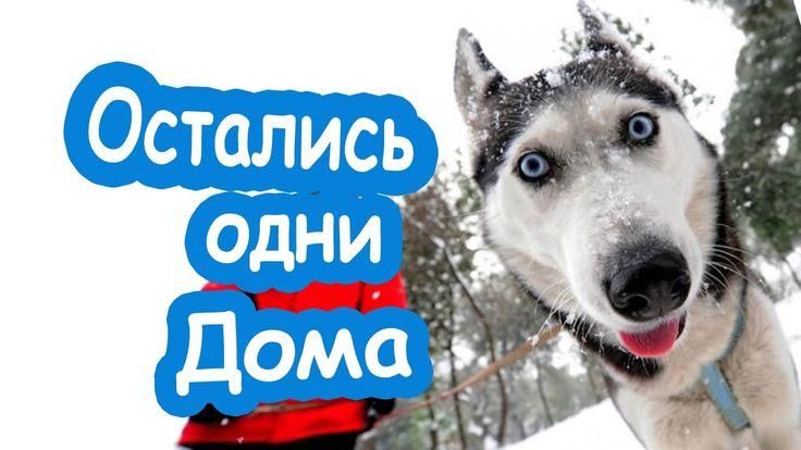 Примите поздравление я нашкодил Приколы про животных собаки нашкодили Со...