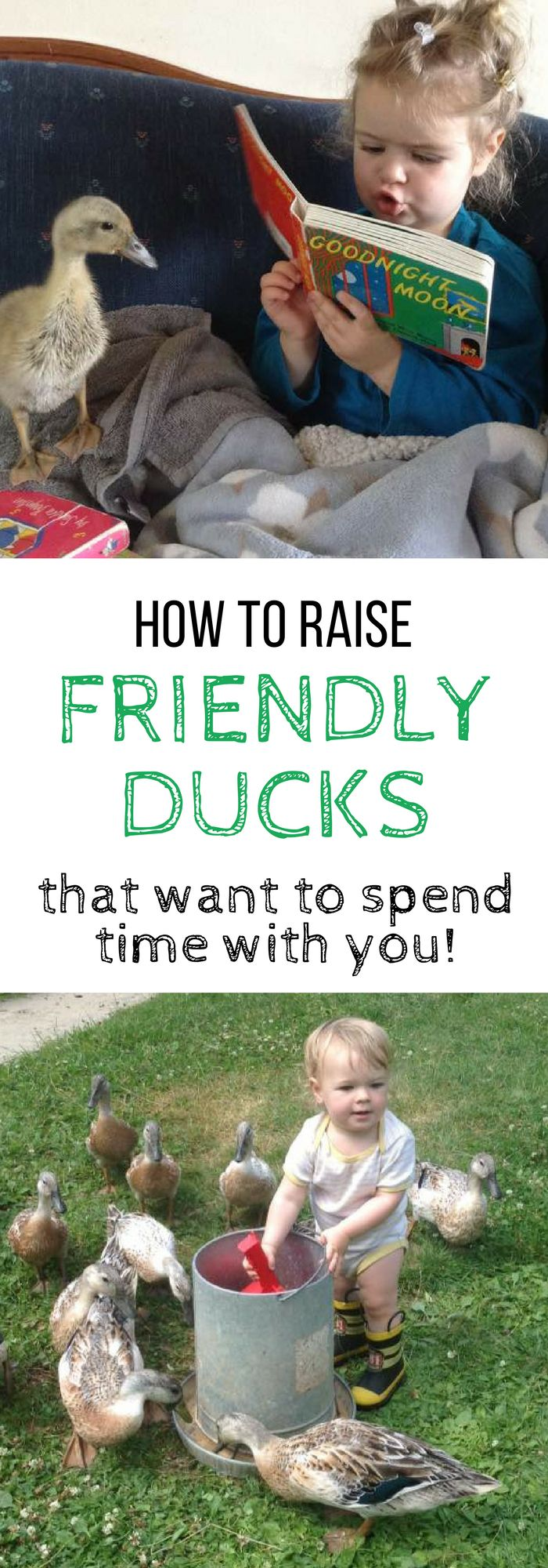 BEST TIPS for raising friendly ducks that actually want to spend time with you and your family! #petchickens