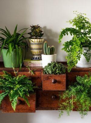 Aménagement intérieur avec des plantes - succulentes, cactus - potted plants and botanical design for the indoor garden