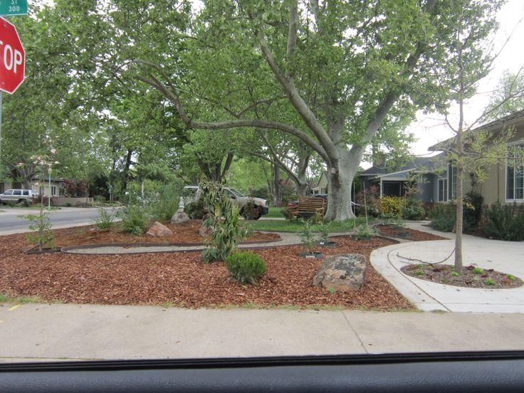 24 best images about drought tolerant yard on pinterest gardens perennials and front yard. Black Bedroom Furniture Sets. Home Design Ideas