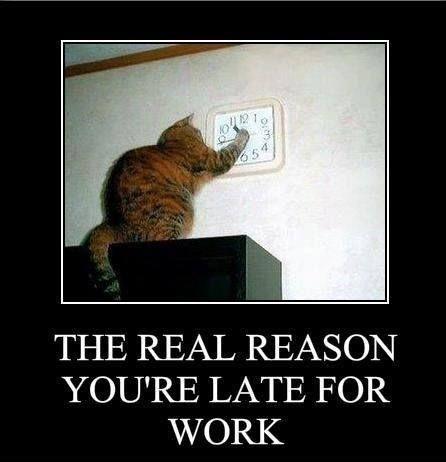 ich hab zwar keine Katze - das ist bestimmt der Grund