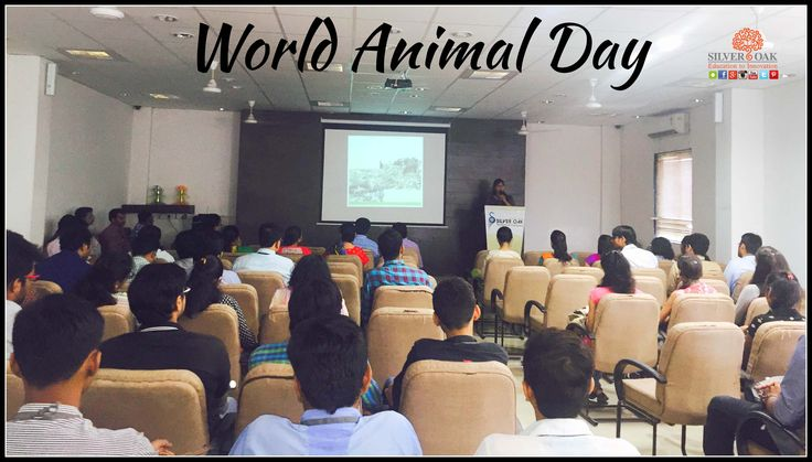 The greatness of a nation can be judged by the way its animals are treated- Mahatma Gandhi. Silver Oak College Of Engineering & Technology celebrated WORLD ANIMAL DAY an international day of action for animal rights and welfare. We Invited Ms. Akanksha Mukharji from JIVDAYA CHARITABLE TRUST. She shared her views on animal welfare and how their trust reaches at the place where animals get injured in Ahmedabad and gives treatment to them there