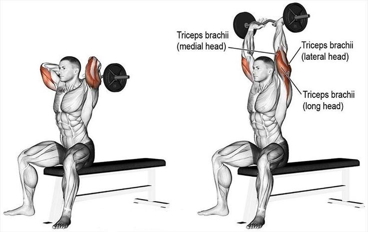 19 Best Best Triceps Exercises Images On Pinterest