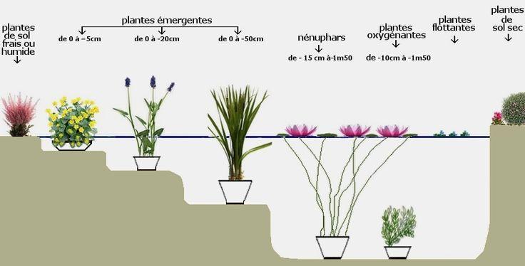 Plantes de bassin - Santonine - Plantes aquatiques
