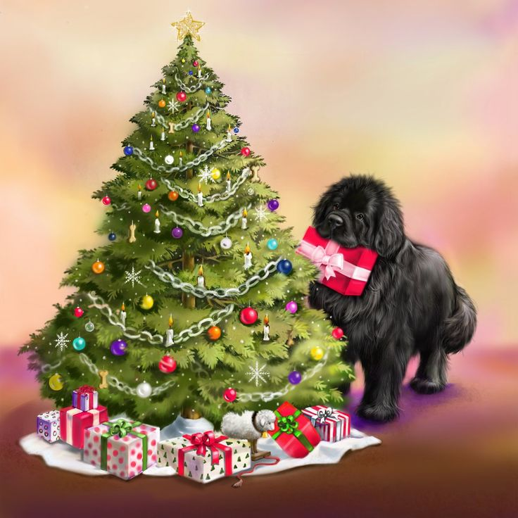 Newf with Christmas tree 10 cards Christmas tree