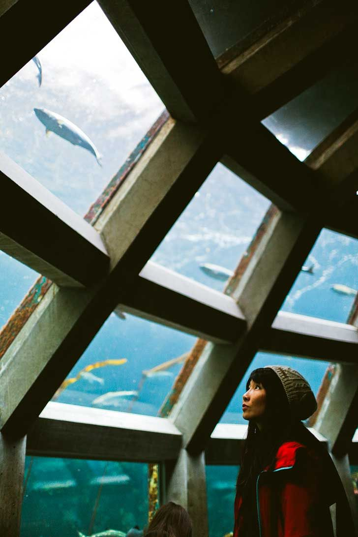 Seattle Aquarium (Guide to the Best Museums in Seattle + Seattle Museum Free Days) // localadventurer.com