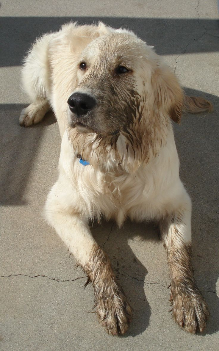 Best Dogs Images On Pinterest Beautiful Dogs Doggies And Dogs - 28 times letting your dog play in the mud wasnt a good idea