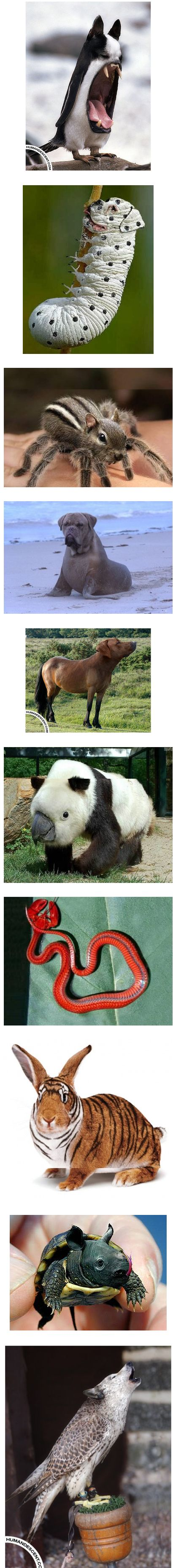 Cool photoshopped animals