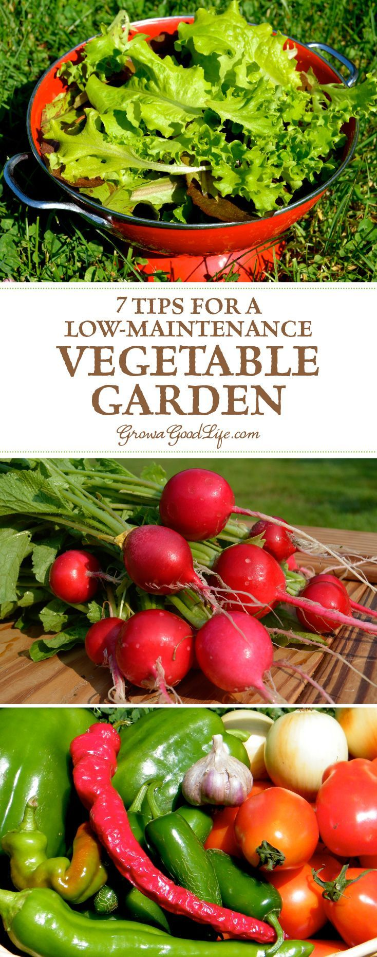 Food garden pictures - 7 Tips For A Low Maintenance Vegetable Garden