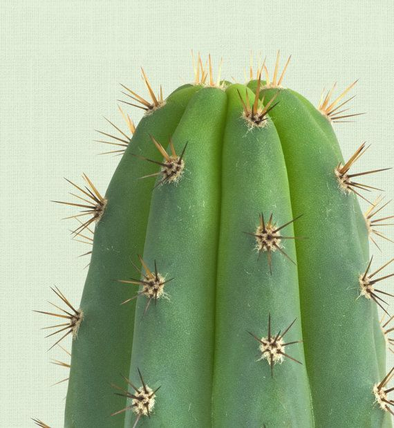 Cactus Print Cactus Wall Art Cactus Photography by TheModernTrend