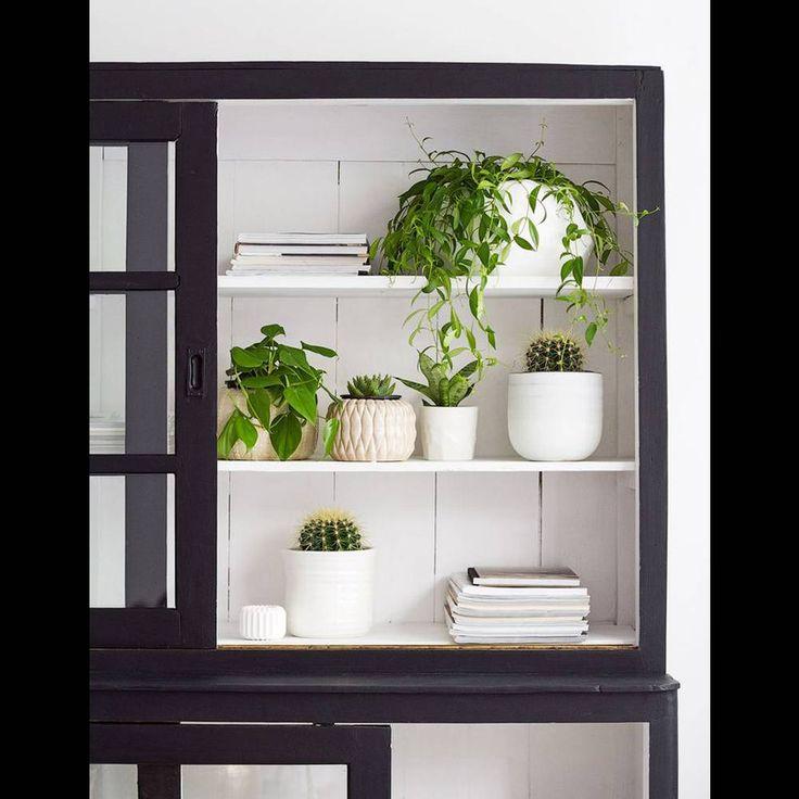 Une décoration végétale via des plantes disposées dans un vaisselier