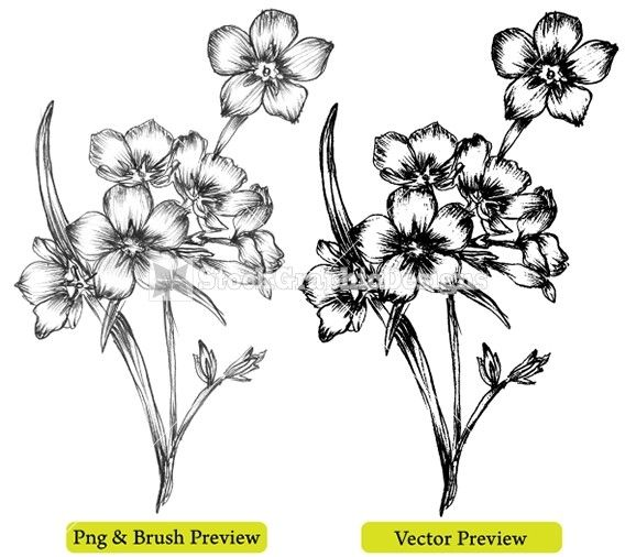Beautiful Flowers Drawing Images & Pictures - Becuo ...
