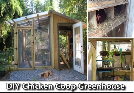 DIY Chicken Coop Greenhouse - It is both a chicken coop and a greenhouse in one structure