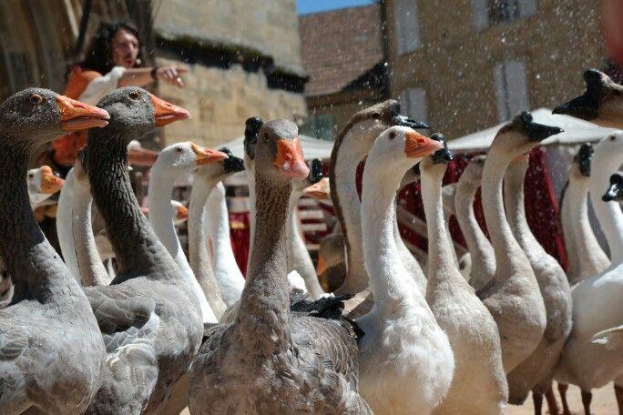 Wet goose.