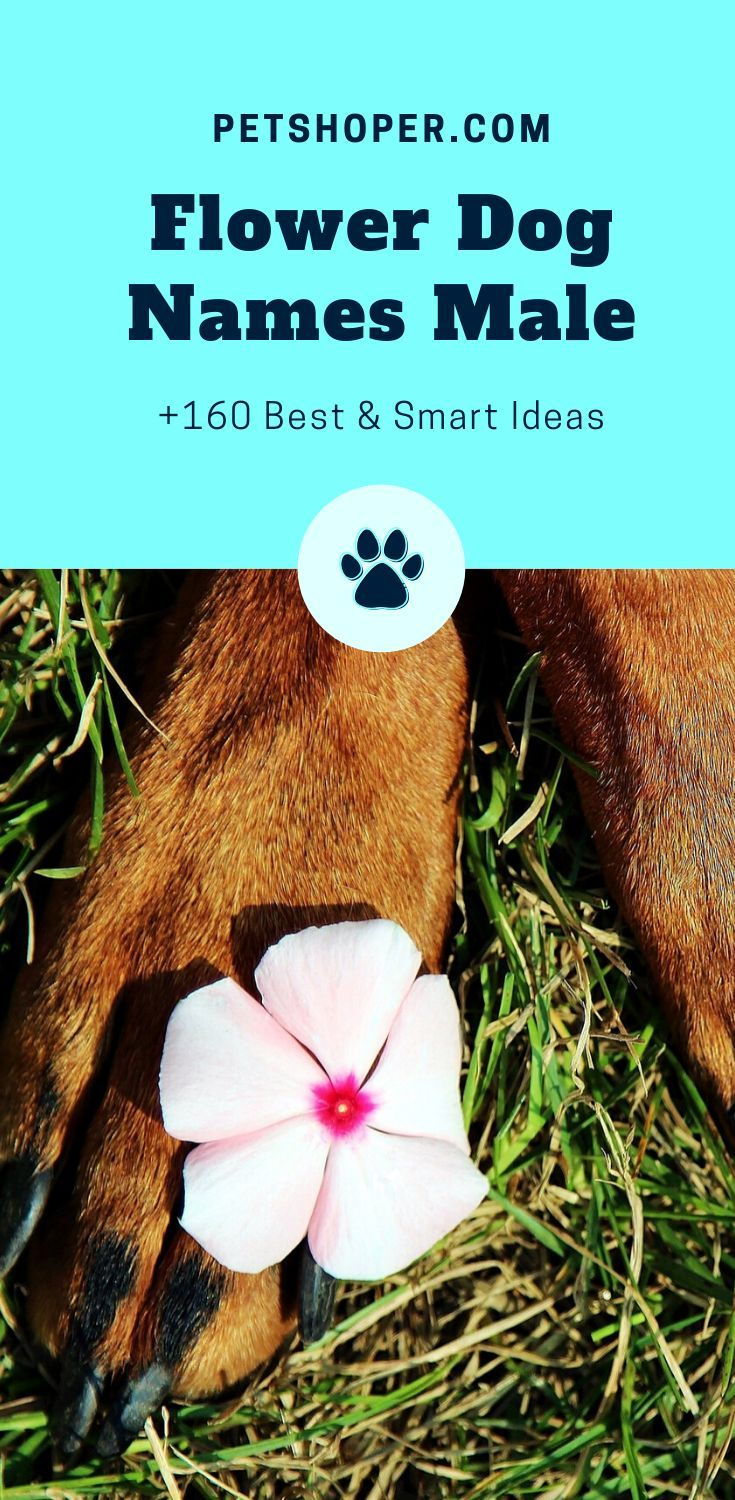 Flower Names For Dogs +160 Best in 2020 Puppies names