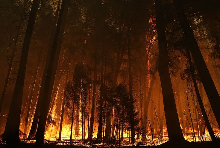 Incendiu de pădure într-o zonă a Parcului Naţional Yosemite, situată în apropierea localităţii Groveland, #California, duminică, 25 august 2013. (  Justin Sullivan / Getty Images / AFP  ) - See more at: http://zoom.mediafax.ro/news/best-of-news-august-2013-11297183#sthash.kof5jDsG.dpuf