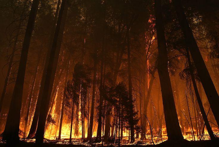 Incendiu de pădure într-o zonă a Parcului Naţional Yosemite, situată în apropierea localităţii Groveland, #California, duminică, 25 august 2013. (  Justin Sullivan / Getty Images / AFP  ) - See more at: http://zoom.mediafax.ro/news/best-of-news-august-2013-11297183#sthash.kof5jDsG.dpuf