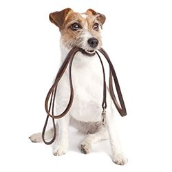 Specialized insurance for dog walkers. Covers lost keys & lock replacement, transportation of pets,accidental injury or loss of the dogs themselves. Walkers need professional liability coverage if they provide pet care instruction or advice to their clients.