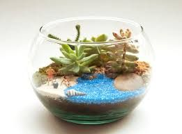 Resultado de imagen para matera terrarios en vidrio bogota