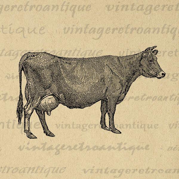 Printable Graphic Cow Digital Image Farm Antique Animal Download Cow Illustration Digital Vintage Clip Art Jpg Png Eps Print 300dpi No.3152 @ vintageretroantique.com #DigitalArt #Printable #Art #VintageRetroAntique #Digital #Clipart #Download #Vintage #Antique #Image #Illustration