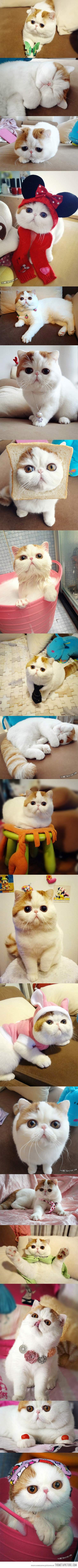 Snoopy, the cutest cat ever…