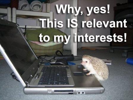 How to Help Your Blog Posts Rank Higher?: Animals, John Watson, Funny Animal, Sherlock Holmes, Blog, Photo, Hedgehogs