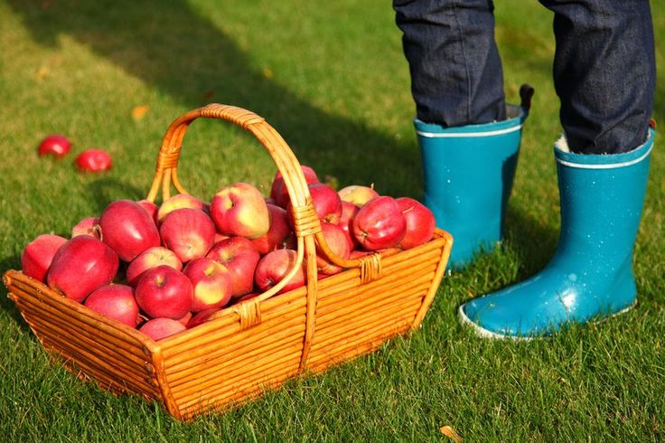 Apple Picking Places | | BergenMama | Your number one resource for all things cool and hip in Bergen County, New Jersey