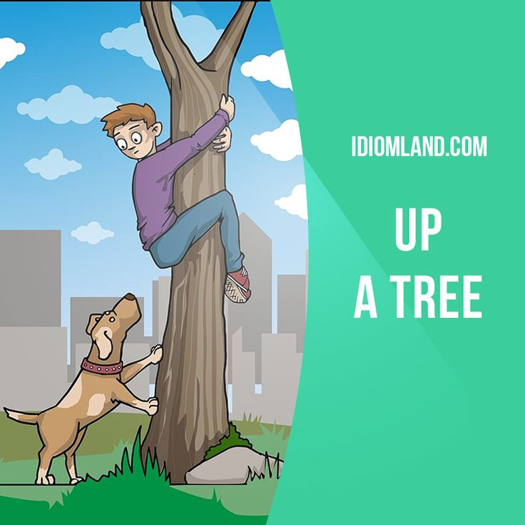 """Up a tree"" means ""in a difficult situation"". Example: They found the drugs in his suitcase, so he was up a tree."
