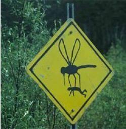 Mosquitos en Lambaré