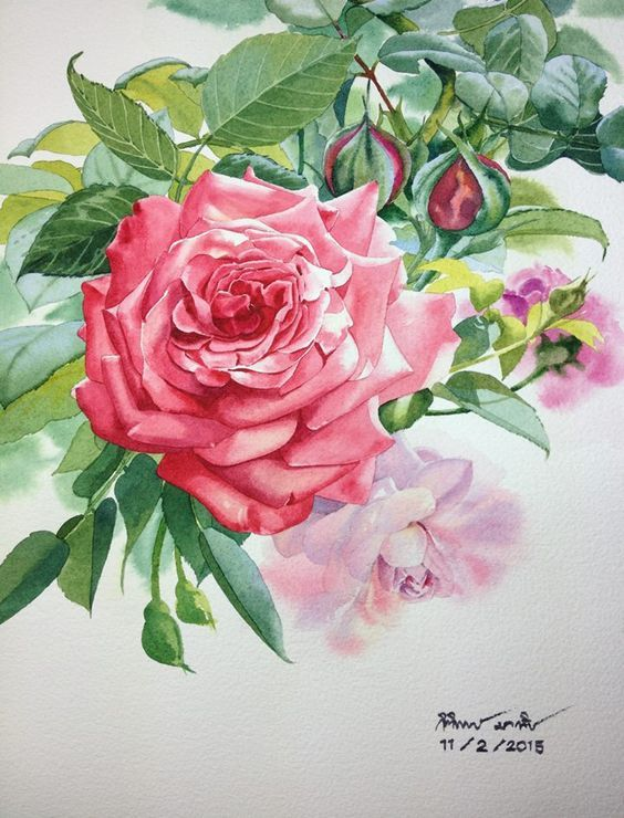 95 best Roses images on Pinterest | Water colors, Flower ...