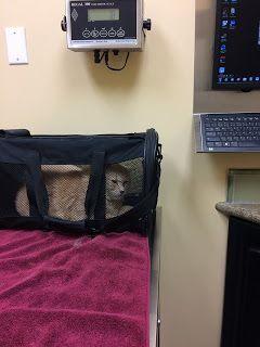 Gerald Saul: Sylvie at the vet