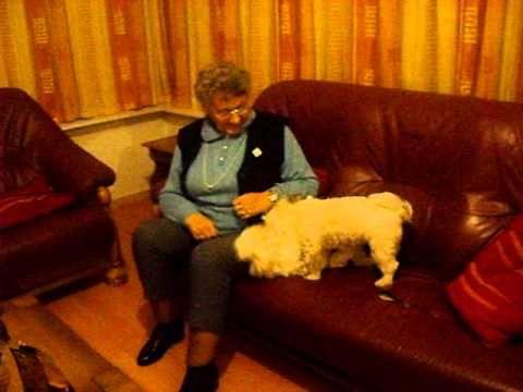 Mijn moeder gezellig bij ons met de honden.