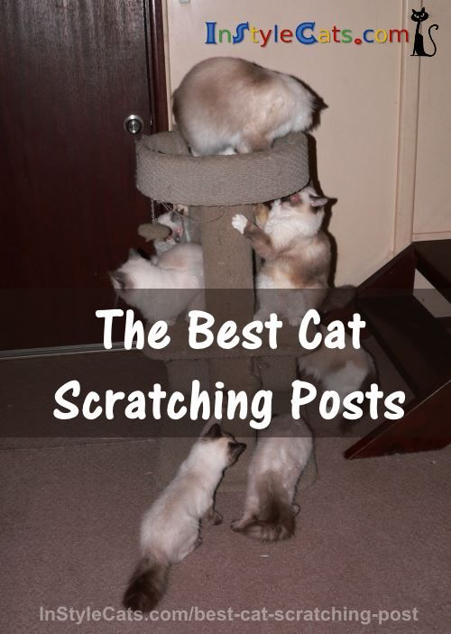 The Best Cat Scratching Post - What Is It? There are many different cat trees, scratching posts, cat condos on the market. Some are specific to different,